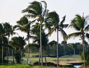 Golf_view